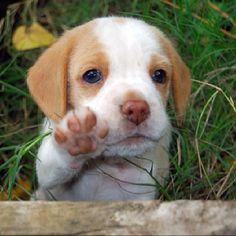 Hello, I'm a cute puppy.