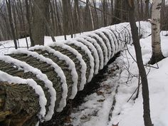 §§§ : Snow-Striped Tree : land art by James Schidlowsky