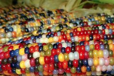 The story of Glass Gem corn begins with Carl Barnes, a half Cherokee, farmer living in Oklahoma. You've never seen corn like this before. Organic Vegetable Seeds, Organic Vegetables, Cherokees, Rainbow Corn, Colored Corn, Coloured Glass, Glass Gem Corn, Glass Beads, American Corn