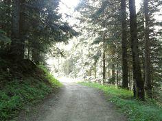 >> Walk in the woods