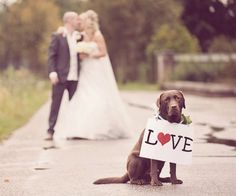 If I were getting married in Texas, I would totally have my pets at my wedding! adorable ways to include your pets in your wedding day photos. Dog Wedding, Wedding Pictures, Dream Wedding, Wedding Day, Trendy Wedding, Wedding Bride, Wedding Stage, Wedding Album, Wedding Paper