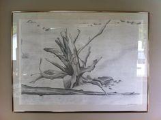 Drift wood drawing