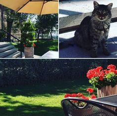 Erimtan müzesi cafesi ve bahçesi  Erimtan Museum Cafe and garden