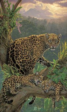 FAMILY TREE - JAGUARS by Lee Kromschroeder