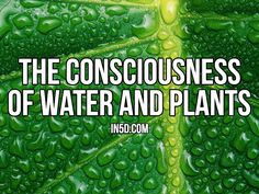 by Gregg Prescott, M.S. Editor, In5D.com How is water and consciousness tied together and related to humans and plants? One of the original pioneers in water consciousness studies, Dr. Marcel Vogel...
