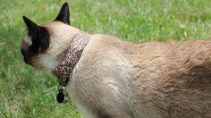 Utilizan un gato para hackear el WiFi de los vecinos