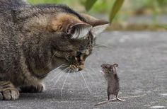 猫とネズミ。なにかネズミが話しかけてるみたい  pic.twitter.com/FsZNwCTxG8