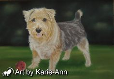 Terrier pet portrait of Rooney from photos in pastel. Meet the footballing ace of the terrier world and see his pet portrait created.
