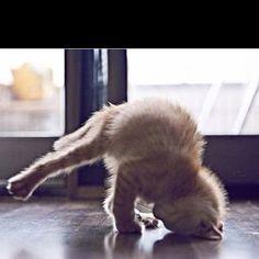 #Cat #YOGA www.tutorz.com/find/yoga