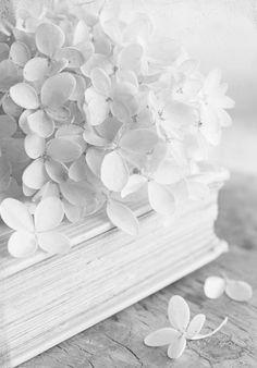 Jasmin, fleur noble et précieuse
