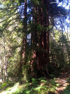 Santa Cruz Mountains