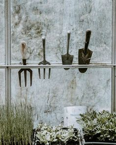 Fantastic Organic Gardening Tips That Really Work Free Pictures, Free Images, Luxury Garden Furniture, Flora, Nursery Pictures, Inside Plants, Organic Gardening Tips, All The Way Down, Glass House