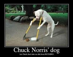 Chuck Norris' dog