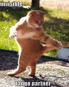 Funny Cat Pictures – 27 Pics #Cats