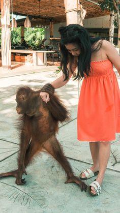 Meet Septi, a Female Sumatran Orang Utan - Midget Fidgets Cute Animals, Summer Dresses, Orange, Female, Blog, Travel, Fashion, Bon Voyage, Pretty Animals