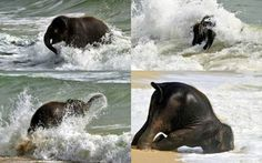 Bebê elefante se esbalda em sua primeira visita à praia [vídeo]