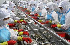 WTO công bố phán quyết về vụ kiện tôm giữa VN và Mỹ | Vietnam Aquaculture Network - Mạng Thủy sản Việt Nam