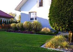 Moja codzienność - ogród Oli - strona 1070 - Forum ogrodnicze - Ogrodowisko