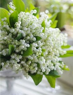 ❧ Lily of the valley - Muguet ❧ Fresh Flowers, Spring Flowers, White Flowers, Beautiful Flowers, Beautiful Flower Arrangements, Floral Arrangements, Valley Flowers, Garden Shrubs, Lily Of The Valley