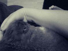 BunnyLove Rabbit, Animals, Bunny, Rabbits, Animales, Animaux, Bunnies, Animal, Animais