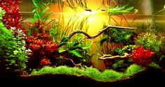 The use of a long aquarium is becoming more and more widespread and with aquascapes like this one it's easy to see why. Description from aquaristmagazine.com. I searched for this on bing.com/images