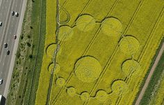 Crop circles have begun appearing in yellow rapeseed fields in Wiltshire.