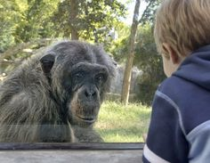 9 Best Zoo Near Me images in 2017 | Pretty animals, Animal