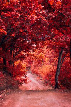 """Autumn Forest - By Vasilis Ramiotis """