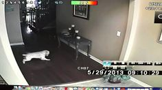 I don't know if this is a parody or legit, but that dog did looked spooked to me! Ghosts in my house!!! [REAL GHOST FOOTAGE]