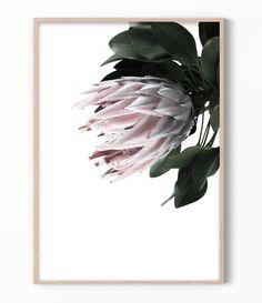 Protea Flower Print, Flower Photography, Botanical Print, Pink Flower Wall Art, Modern Floral Wall A Flower Artwork, Flower Wall, Flower Prints, Flower Paintings, Protea Art, Protea Flower, Highland Cow Art, Australian Native Flowers, Australian Art