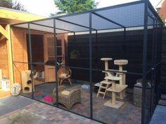 Diy Cat Enclosure, Outdoor Cat Enclosure, Cat Cages Indoor, Outdoor Cat Run, Diy Cat Shelves, Cat Habitat, Cat Kennel, Cat Hotel, Cat Playground