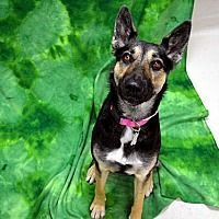 Pictures Of Dahlia A Shepherd Unknown Type For Adoption In
