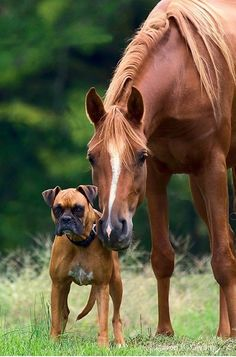 I'm warning you, don't come near this horse. #puppied