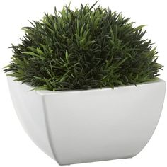 Crate & Barrel Potted Artificial Moss (895 RUB) ❤ liked on Polyvore featuring home, home decor, floral decor, plants, fillers, flowers, green home decor, spring home decor, flower stem and crate and barrel