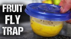 There are few ways to make a decent DIY fruit fly trap, but this one also adds a fresh lemon scent to your kitchen. All you need is a small plastic container and a lemon.
