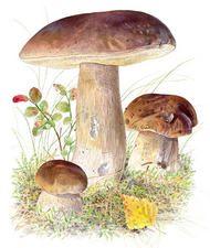 herkkutatti Fungi, Berries, Stuffed Mushrooms, Bird, Fruit, Vegetables, Outdoor Decor, Nature, Plants