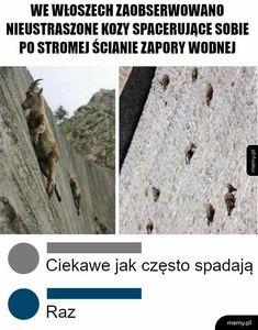 Very Funny Memes, Wtf Funny, Funny Cute, Hilarious, Funny Stuff, Polish Memes, Anime Mems, Weekend Humor, Fotografia