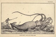 From Marvels of Animal Life (1855).