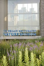 The Peggy Notebaert Museum is a nature museum in Lincoln Park that focuses on the natural history of the Chicago region. With permanent exhibitions like their popular Butterfly Haven, the museum is an interactive experience that delights both children & adults!