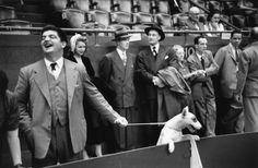 Ruth Orkin, Dog Show,1948