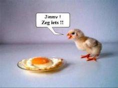 Dieren- eieren- moppen