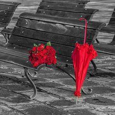 #red roses #red umbrella