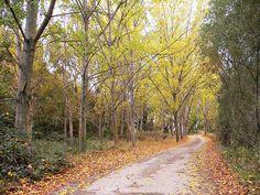 Caminar por estos parajes es muy agradable,puedes ir de Quel a Arnedo  admirando el paisaje  y  sacando fotos  Todas las estaciones tienen su encanto, pero en otoño, los colores son embriagadores