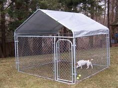 Dog Cage Outdoor, Outdoor Cat Tree, Wire Dog Kennel, Chain Link Dog Kennel, Dog Cages, Pet Cage, In The Zoo, Big Animals, Kinds Of Dogs
