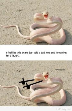 Funny snake meme picture | Funny Pictures | Funny Quotes | Funny Jokes – Photos, Images, Pics