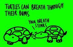 Your Breath Stinks... like poo!