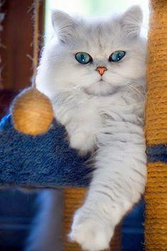 Gatos e gatinhos lindos...
