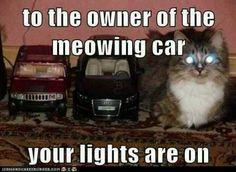 nanana Cat car