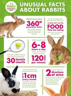 Facts about rabbits Rabbit Toys, Bunny Toys, Pet Rabbit, Bunny Bunny, Rabbit Life, House Rabbit, Rabbit Facts, Flemish Giant Rabbit, Rabbit Behavior