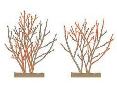 apfelbaum schneiden tipps f r jede baumgr e obstbaumschnitt u pflege bonsai garden. Black Bedroom Furniture Sets. Home Design Ideas